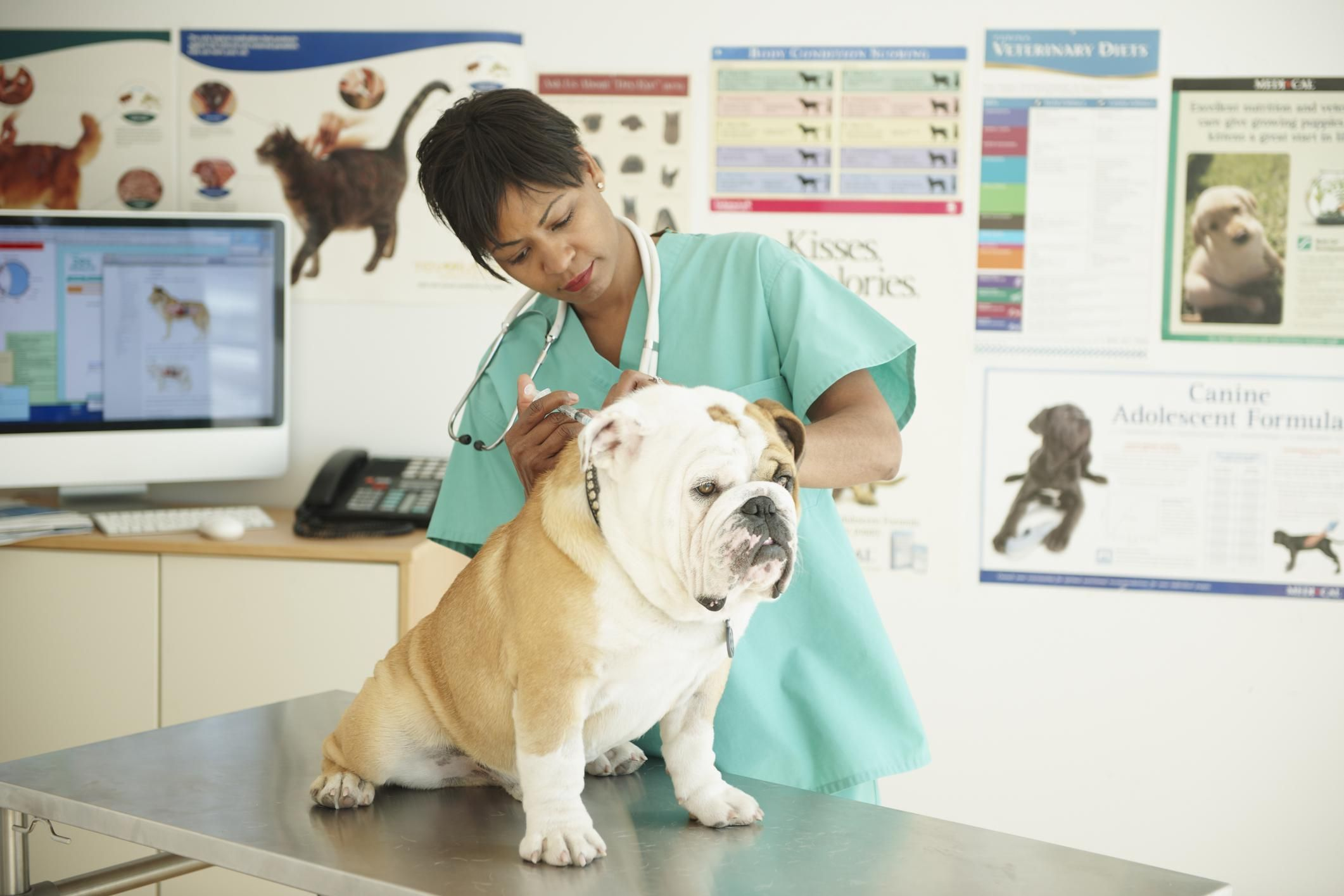 Qualities of a Good Veterinary Hospital
