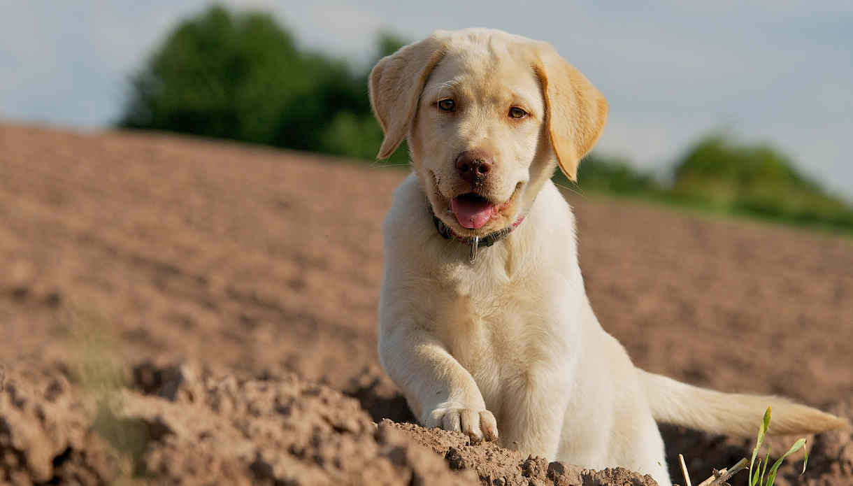 Dogs and Puppy Training